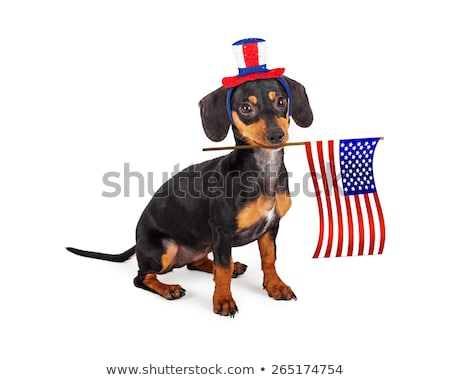 Stock photo: Dog Holding American Flag In His Mouth
