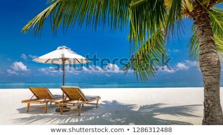 palmbomen · silhouet · mooie · landschap · natuur - stockfoto © anna_om