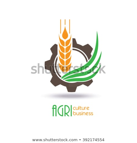 Corn Organic Agricultural Raised Food Icon Vector Stock photo © robuart