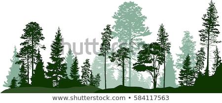 zöld · fa · sziluett · illusztráció · textúra · fa · erdő - stock fotó © Blue_daemon