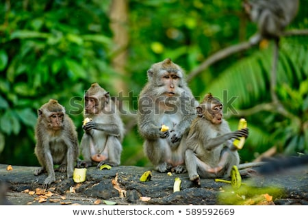 Monkey in the forest stock photo © colematt