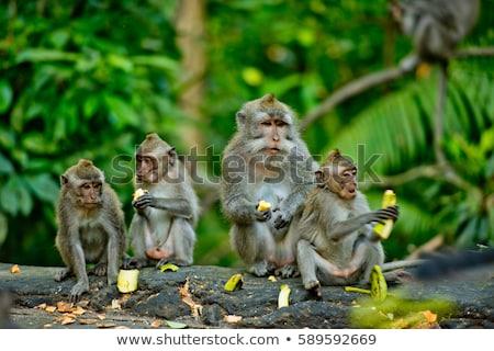 macaco · floresta · ilustração · água · peixe · natureza - foto stock © colematt
