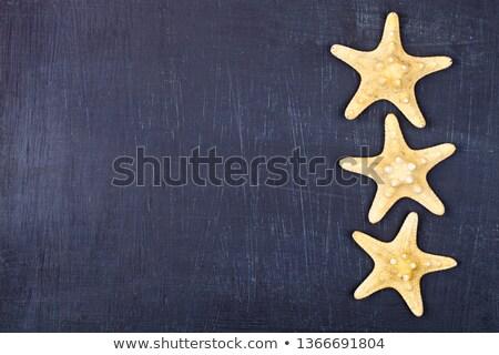 Top drie zeester zwarte exemplaar ruimte Stockfoto © marylooo