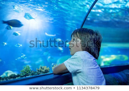 little boy kid watching the shoal of fish swimming in oceanarium children enjoying underwater life stock photo © galitskaya