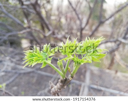 Baby neem plants Stock photo © bdspn