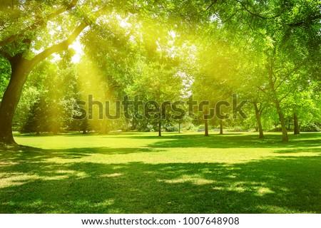 Park Garden Stock photo © Serg64