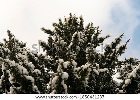Kar yağışı yeşil bulutlar arka plan kış tatil Stok fotoğraf © romvo