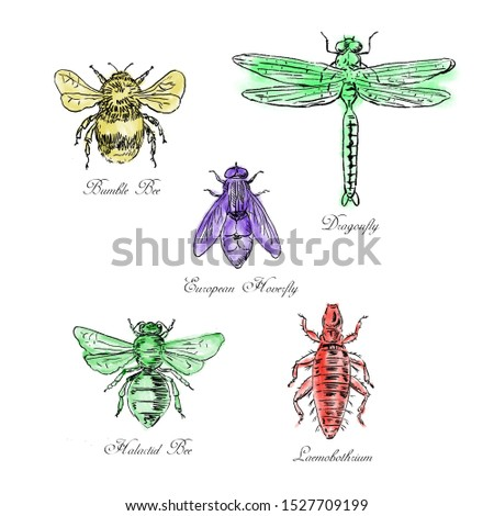 Bumble Bee, European Hoverfly, Dragonfly, Hlalactid Bee, and Lice Vintage Collection Stock photo © patrimonio