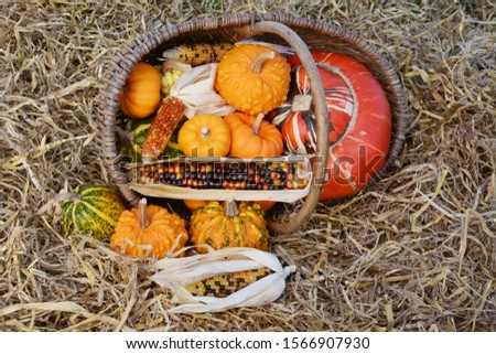 Fall selection of ornamental gourds and corn spilling from baske Stock photo © sarahdoow