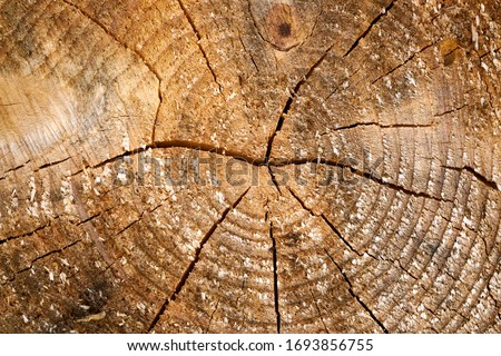 Wood material surface tree age rings texture. Wooden rings surface. 4K rings background. Vintage eff Stock photo © kyryloff