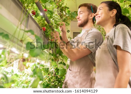 Young greenhouse workers standing in aisle between growing strawberries Stock photo © pressmaster