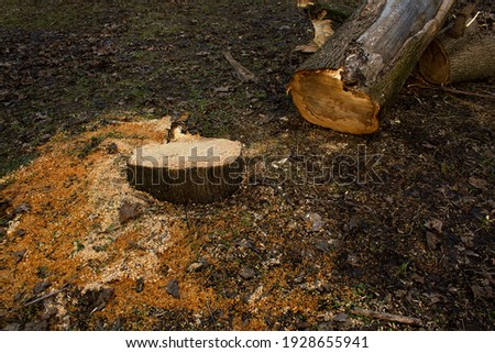 Earth global warming. Vector planet with cut down tree and dead fish. Warning ecology poster. Concep Stock photo © designer_things
