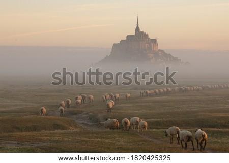 beyaz · kalem · çiftlik · koyun · hayvan · tarım - stok fotoğraf © tilo