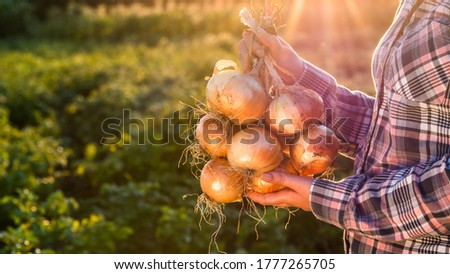 Onion vegetable  Stock photo © natika