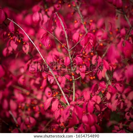 сжигание · шип · Буш · изображение · дерево · огня - Сток-фото © haraldmuc