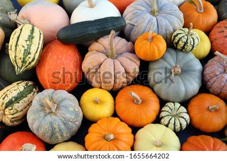 Farklı kabak sonbahar hasat pazar Stok fotoğraf © juniart