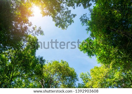 Canopy of tall trees framing a clear blue sky, with the sun shining through Stock photo © Zhukow