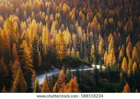 дороги · осень · лес · Аппалачи · солнце · пейзаж - Сток-фото © leonidtit