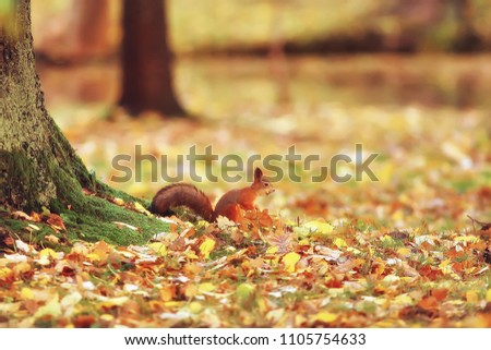 Funny squirrel background. Cute redhead small animal. Rodent fro Stock photo © popaukropa