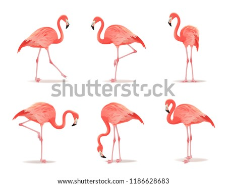 Red and pink flamingo set, vector illustration. Cool exotic bird in different poses decorative desig Stock photo © MarySan