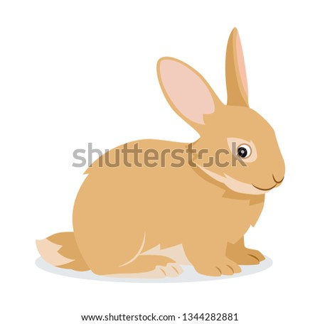 Cute rabbit icon isolated, small fluffy pet with long ears, domestic animal, vector illustration Stock photo © MarySan