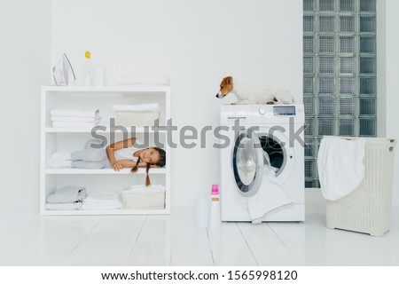 Indoor shot of pedigree dog in laundry basket with white linen in bathroom, console with folded towe Stock photo © vkstudio