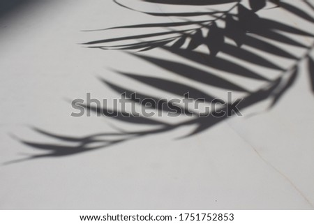 Abstract art, botanical shadows overlay on black background for  Stock photo © Anneleven