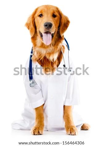 The vet doctor examining golden retriever dog isolated on white Stock photo © Elnur