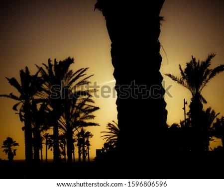 sky, heaven, dusk, evening, , sundown, afterglow, sun, crepuscular, tree,  shore, coast, waterside,  Stock photo © ersler