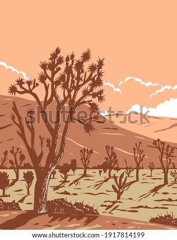 Yucca  Brevifolia Mojave Desert Joshua Tree National Park Califo Stock photo © billperry