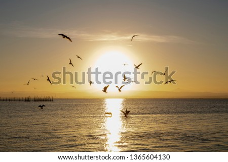 albufera sunset in valencia with seagull ducks and sun reflexion stock photo © lunamarina