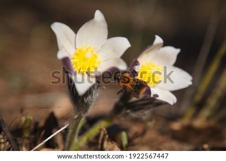 Сток-фото: цветы · Альпы · природы · свет · лист · красоту
