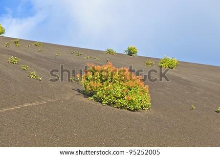 sparse vegetation on volcanic hills in Timanfaya National Park w Stock photo © meinzahn