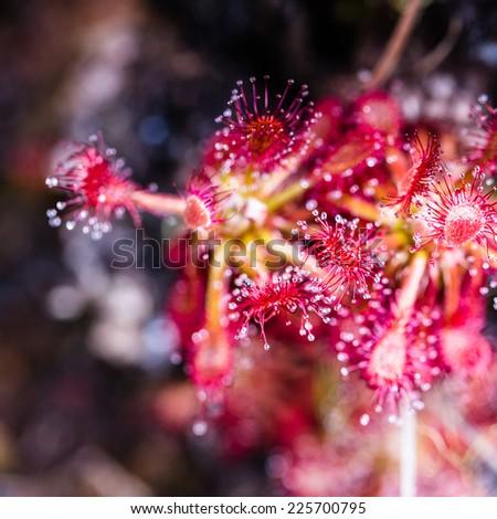 Plateau Wenezuela ameryka południowa kwiat czerwony roślin Zdjęcia stock © Mariusz_Prusaczyk