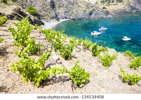 vineyard on Cap de Peyrefite near Cerbere, Languedoc-Roussillon, Stock photo © phbcz