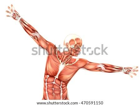 mutat · anatómia · emberi · test · 3d · illusztráció · izolált - stock fotó © kjpargeter