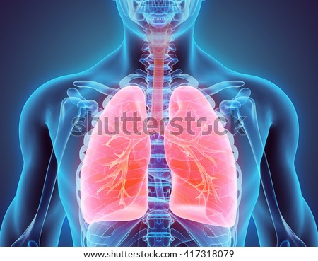 Healthy human lungs. Respiratory system. Lung, larynx and trachea of healthy person. Respiratory sys Stock photo © orensila