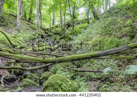 valley with small creek and  moss in the wilderniss of the Eifel Stock photo © meinzahn