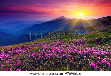 summer landscape with meadow pink rhododendron flowers in the mo stock photo © kotenko