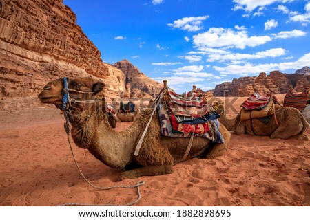 Orange Yellow Sand Rock Formation Valley of Moon Wadi Rum Jordan Stock photo © billperry