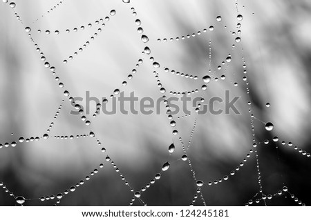 Stock photo: Close up view of the strings of a spiders web. Spider web with c