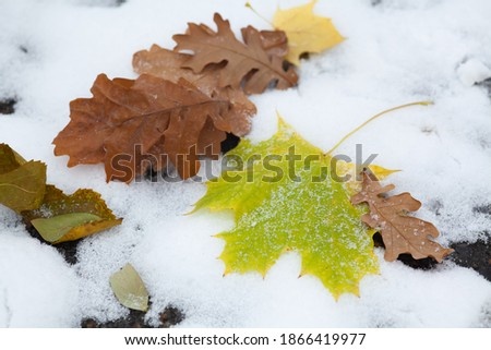 Stock photo: First snow in the city park with trees under fresh snow at sunri
