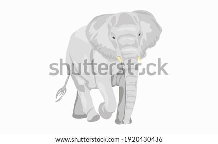 vector cartoon elephant large concave back mammal asian elephant african bush with large ears illust stock photo © nikodzhi