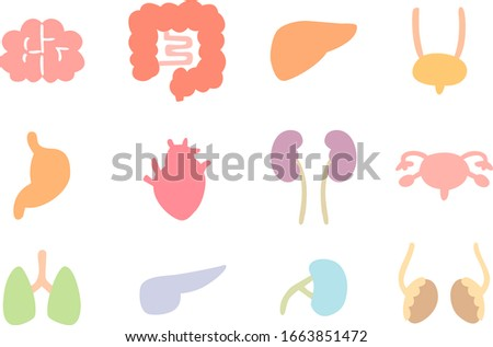 kidney cross section anatomy human internal organ icon medical stock photo © terriana