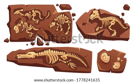 Tyrannosaurus in nature. Skeleton in ground soil. Jurassic monst Stock photo © popaukropa