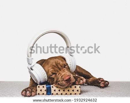 сонный Лабрадор щенков собака таблице ветеринарный Сток-фото © ilona75