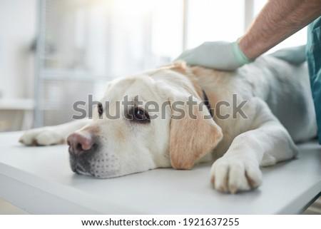 небольшой щенков собака таблице ветеринарный Сток-фото © ilona75