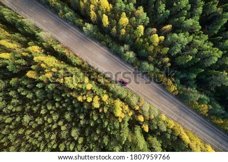 Top view of a dirt road through a green forest on a sunny afternoon. Aerial view from the drone Stock photo © artjazz