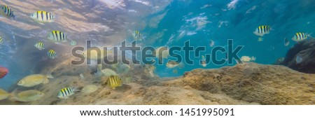 Many fish, anemonsand sea creatures, plants and corals under water near the seabed with sand and sto Stock photo © galitskaya