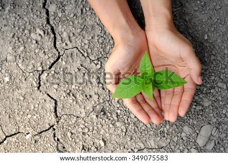 tree growing on cracked earth. growing tree save. the world environmental problems. cut tree. Stock photo © galitskaya